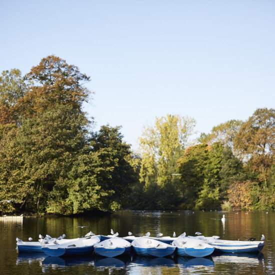Birds on canoes in the lake in Victoria Park, Hackney